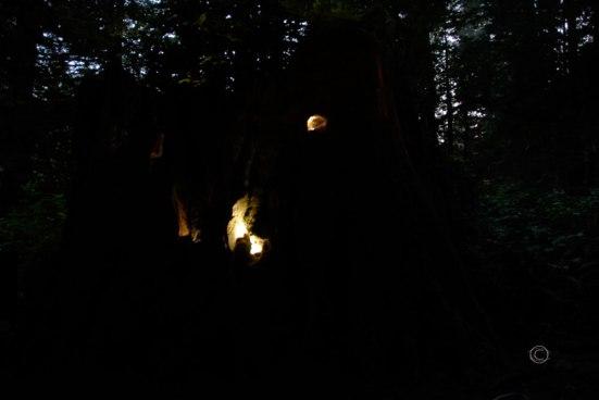 The Stump at night.