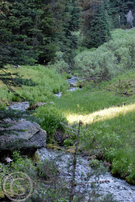 Alpine creek, Castle Crest Wildflower Trail