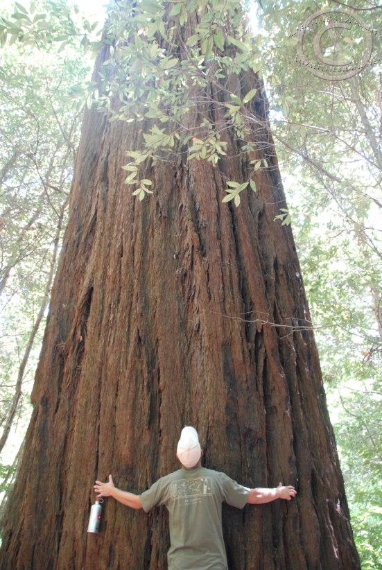 D the treehugger.