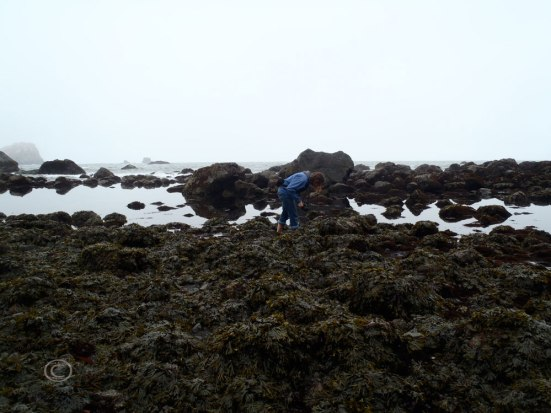 Me searching the tide pools. Photo by D. R. J.