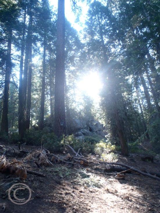 General Grant Grove Trail