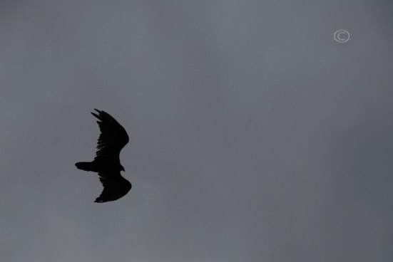 Raven vs. Wind