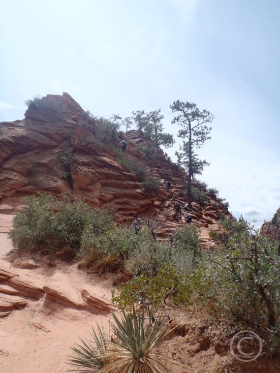 Partial view of trail from Scout's Landing