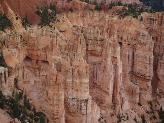Rainbow Point, Bryce Canyon (Photo By D.R.J.)