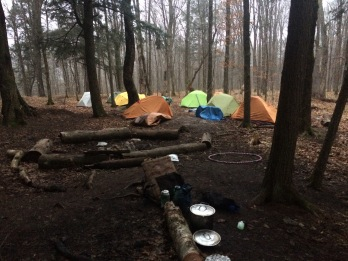 Last morning in the woods