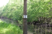 Apple Lake and Bayou DeView Birding Trails in the Dagmar WMA